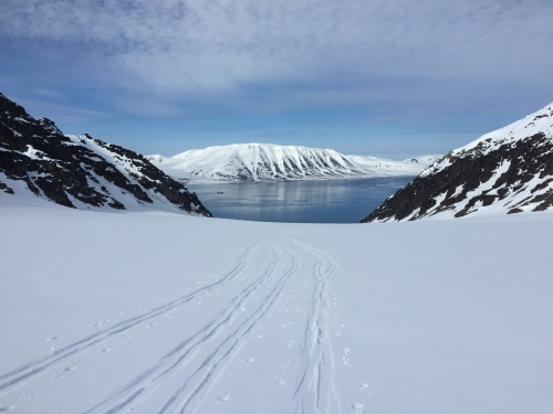 The fjord from skinning tour up Brattkleivbreen